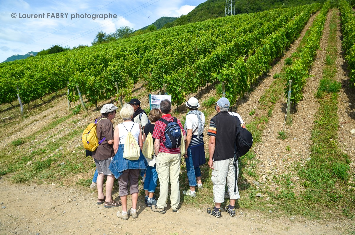 photographe tourisme : les promeneurs de la balade gourmande en Combe de Savoie lisent un panneau d'informations à l'entrée d'un rang de vigne