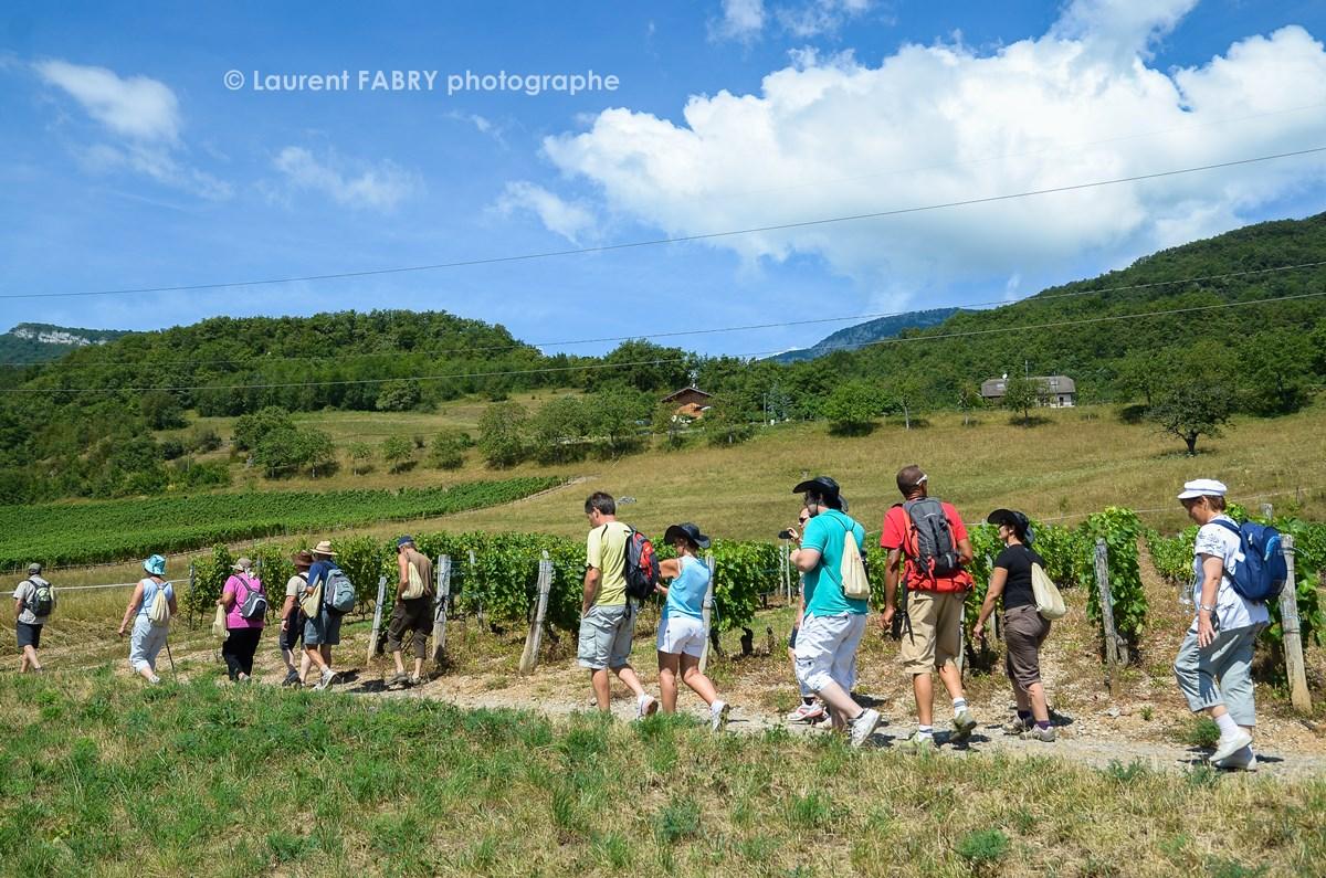 photographe tourisme sur une balade gourmande des participants évoluent entre les vignes sur un chemin