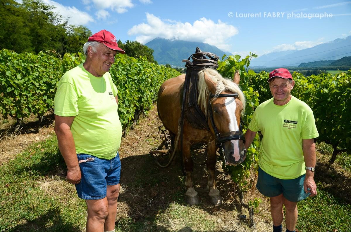 photographe tourisme sur une balade gourmande : des bénévoles montrent le travail de la vigne à cheval