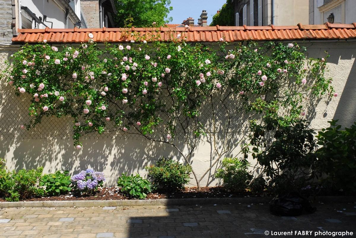 Photographe Architecte Paysagiste : Rosier Grimpant De Couleur Blanche Contre Un Mur Surmonté De Tuiles