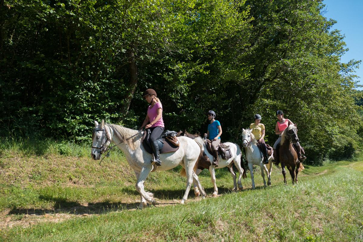 Photographe équin En Auvergne Rhône Alpes : Shooting Photo équestre Dans La Drome Des Collines Pour Le CRTE Rhone Alpes à Ferme Equestre Des Collines
