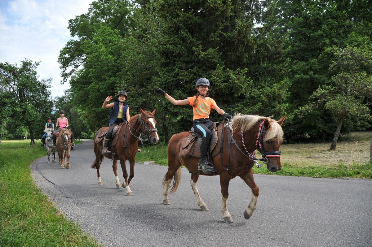 Photographe équestre En Auvergne Rhône Alpes : La Ferme Équestre Des Collines En Reportage Photo Professionnel