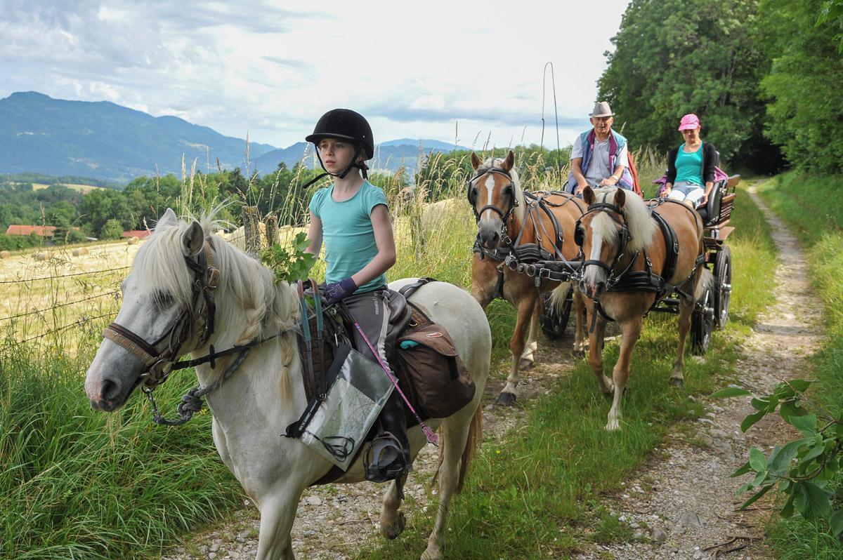 Photographe équestre En Auvergne Rhône Alpes : Shooting Photo Pro à L'Ecole D'Equitation De Peillonnex, Haute Savoie