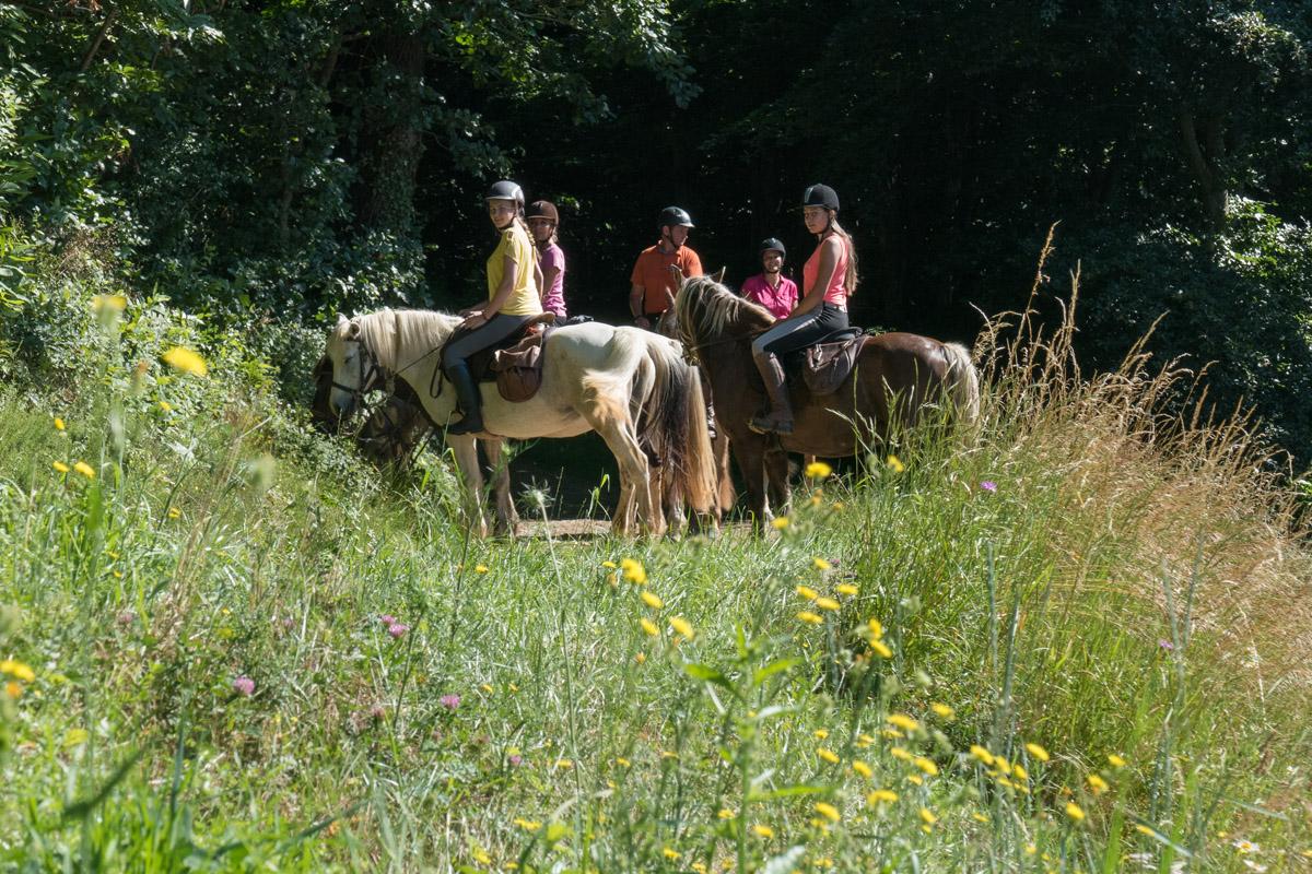 Photographe équestre En Auvergne Rhône Alpes : La Ferme Équestre Des Collines Fait Son Shooting Photo Professionnel