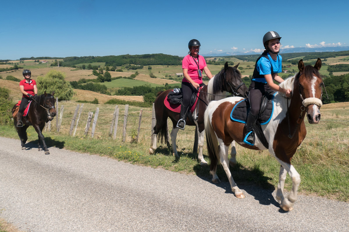 Photographe équestre En Auvergne Rhône Alpes : Shooting Photo Professionnel Pour Drome A Cheval