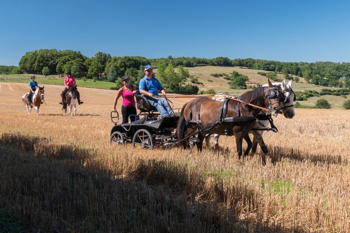 Plan Photo Du Comité Régional De Tourisme Equestre