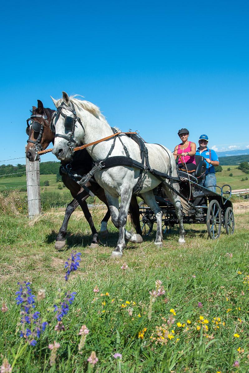 Photographe équin En Auvergne Rhône Alpes : Photo Dans La Drome Des Collines Pour Le CRTE Rhône Alpes Avec Les Cavaliers De La Drome A Cheval Et Réalisée En Auvergne Rhône Alpes