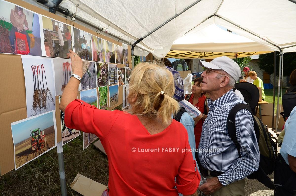 photographe tourisme sur une balade gourmande en Combe de Savoie : les participants découvrent les techniques de greffage des plants de vigne par des panneaux d'informations et des photos