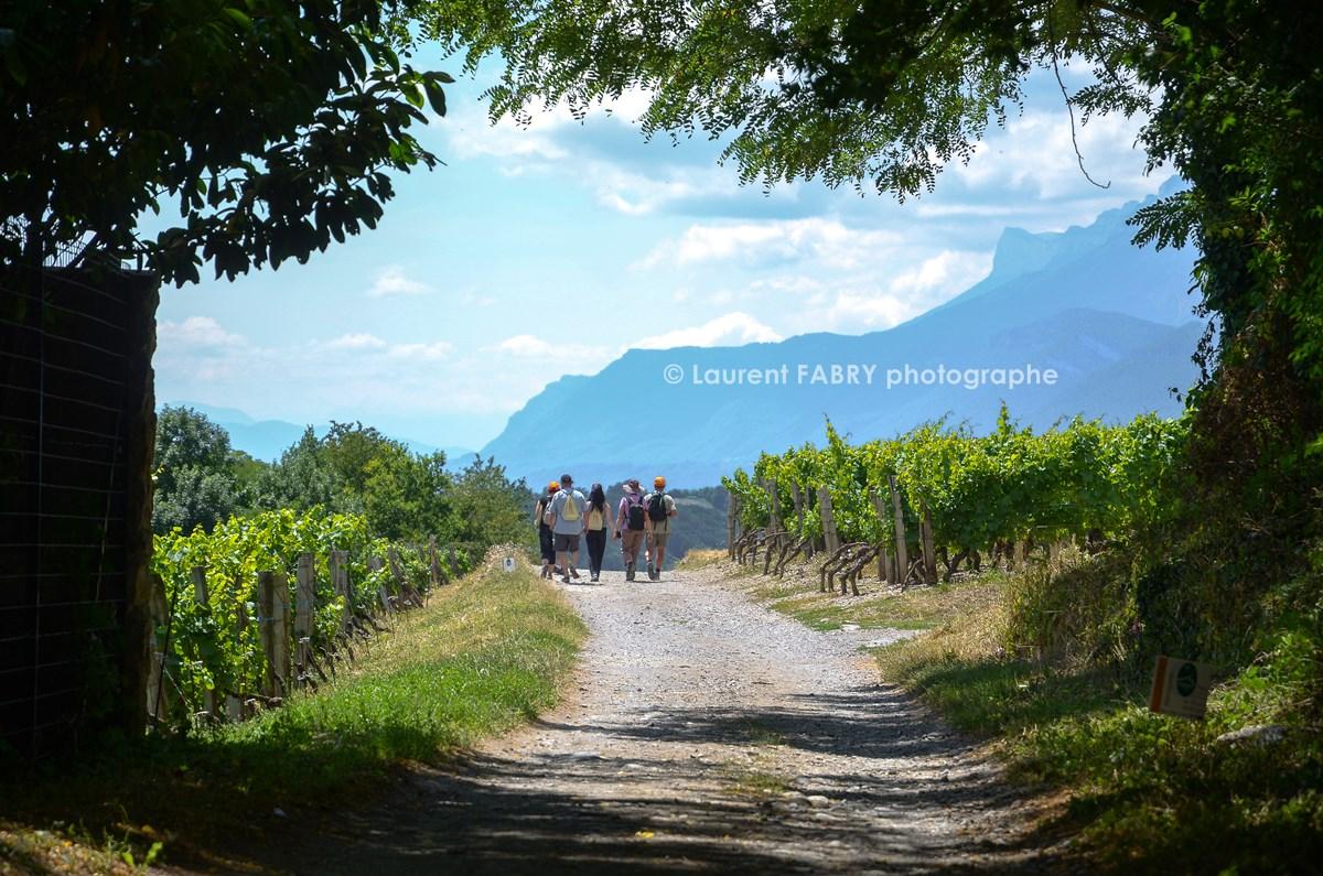 photographe tourisme sur une balade gourmande : des participants s'éloignent sur un chemin