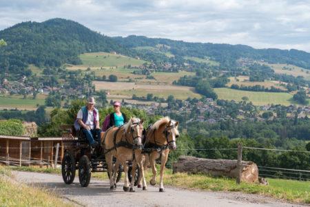 Photographe équestre Auvergne Rhône Alpes : Les Cavaliers De L'Ecole D'Equitation De Peillonnex Font Leur Shooting Photo