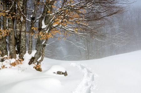 Photographe Patrimoine Et Traditions Dans Les Alpes : Paysage Enneigé