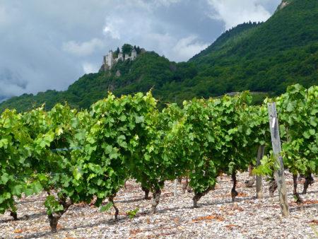 Photographe Patrimoine Et Traditions Dans Les Alpes : Les Vignes Sous Le Château De Miolans
