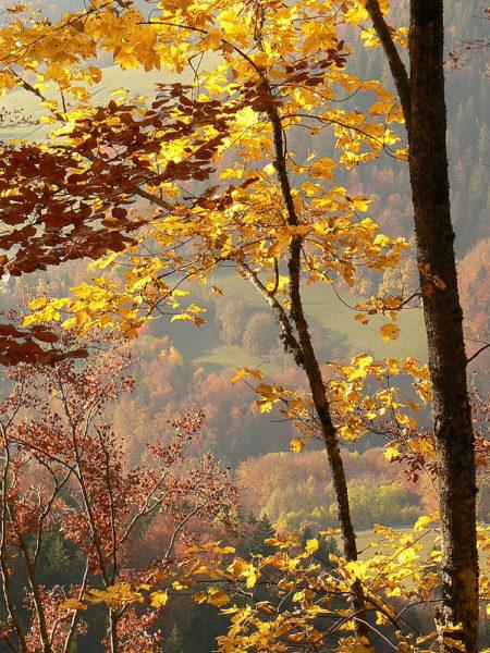 Photographe Patrimoine Et Traditions Dans Les Alpes : Feuilles D'automne Dans Les Bauges
