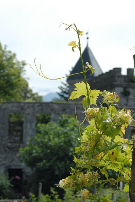 Photographe Patrimoine Et Traditions Dans Les Alpes : Jardins De Plantes Du Château De Miolans, Saint-Pierre D'Albigny