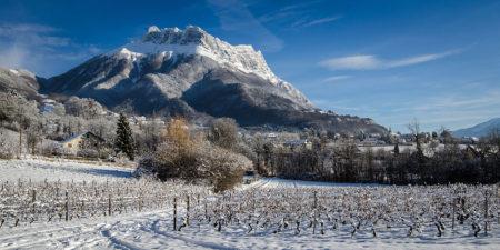 Photographe En Décoration De Bureaux Dans Les Alpes : La Dent D'Arclusaz Enneigée Domine Le Vignoble De Savoie