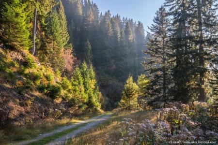 Rayons De Lumière Dans La Forêt Des Saisies (photographe Du Beaufortain, Savoie)