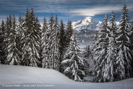 Le Mont Blanc Entre Les Sapins Du Val D'Arly